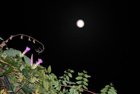 1644満月