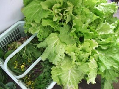 2009_1031自家菜園野菜その2