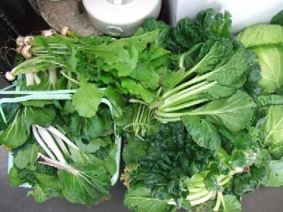 2009_1031自家菜園野菜その1