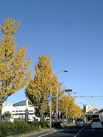 20071119-5.jpg