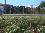 レイクヒルファーム花畑