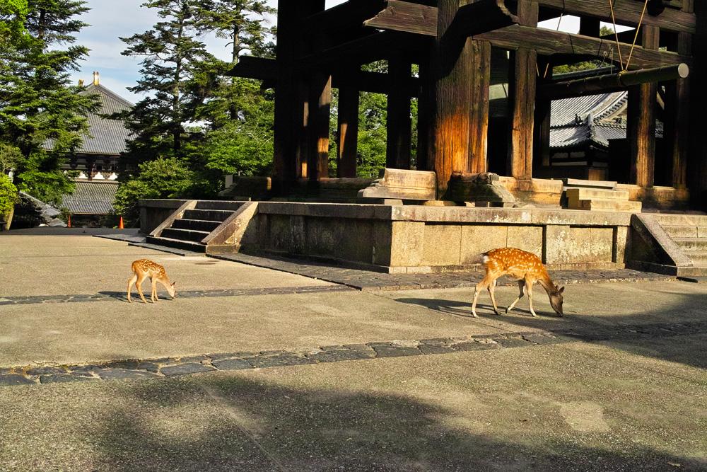 奈良公園08