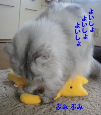 mofu5.jpg