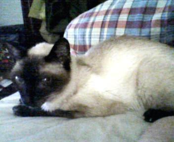 猫さがし写真 2009-09-12