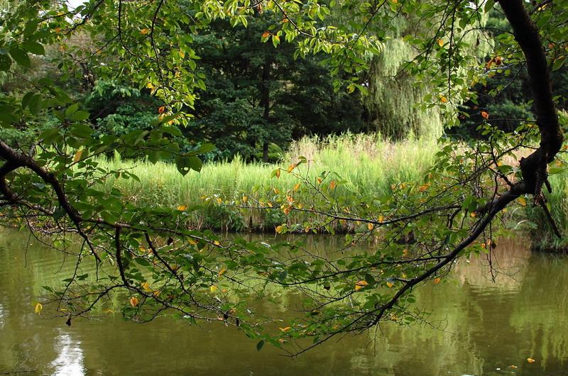下池桜の木