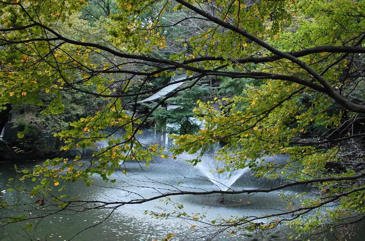 噴水と枯れ桜