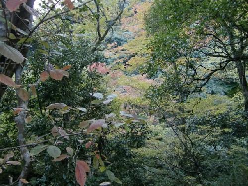 10月24日風景3