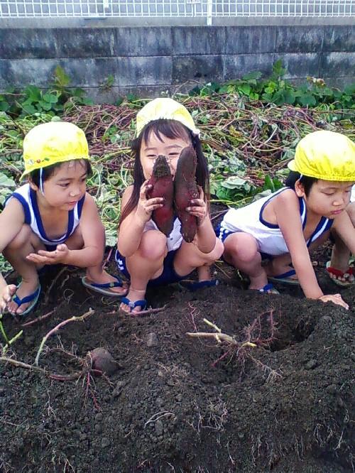 10月29日イモ掘り2