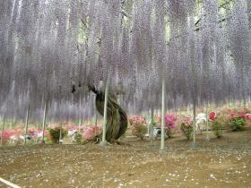 2011flowerpark2.jpg