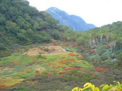 妙高の湿原