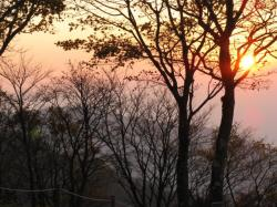 朝日 鍋割と木