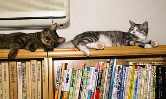 本棚が好き2?5