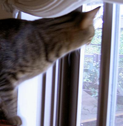 朝の窓辺7