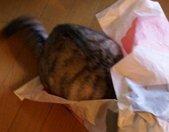 ビニール袋3