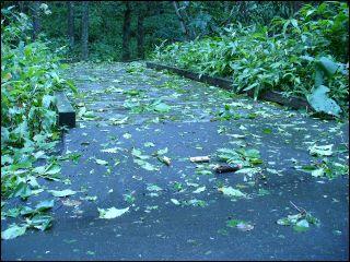 台風9号通過の跡