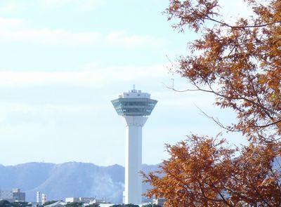 函館五稜郭タワーとメタセコイア