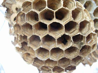 スズメバチの巣のアップ2