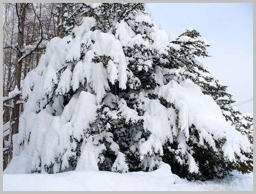 民家の庭先の木