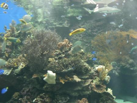 ニューカレドニアの魚