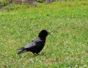 bird14-3.jpg
