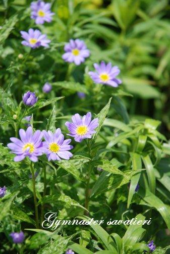 flower14-29.jpg