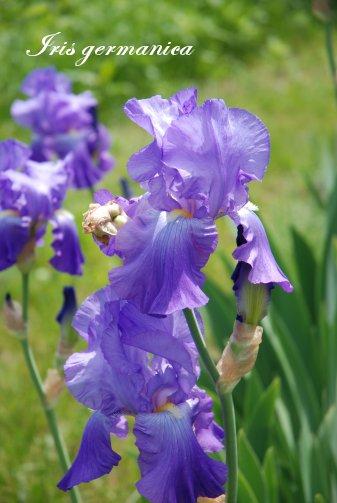 flower14-30.jpg
