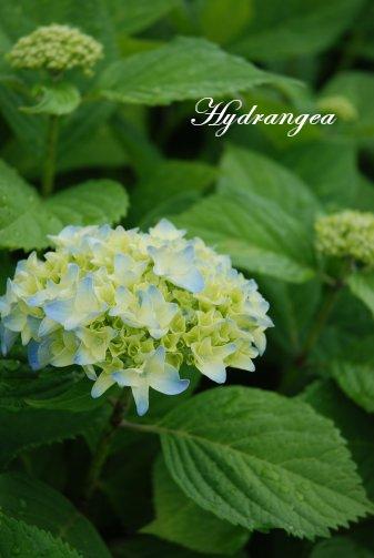 flower14-32.jpg