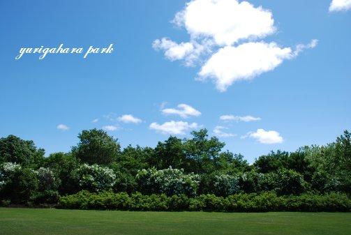 park14-2.jpg