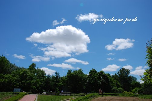 park14-9.jpg