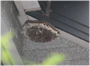 09.9.19蜂の巣