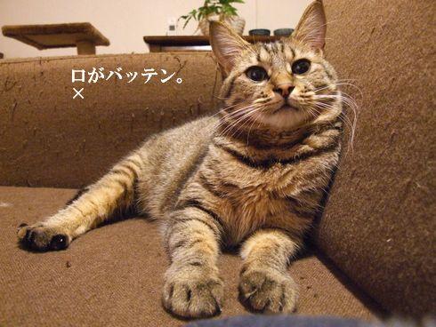 01_20091110194401.jpg
