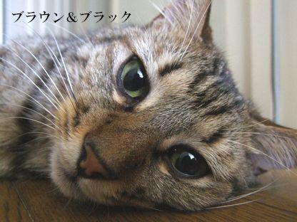 03_20090924171027.jpg