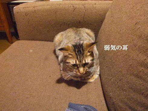 03_20091110194401.jpg