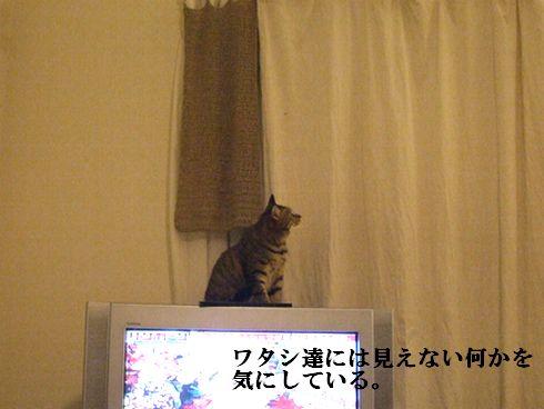 06_20091103144615.jpg