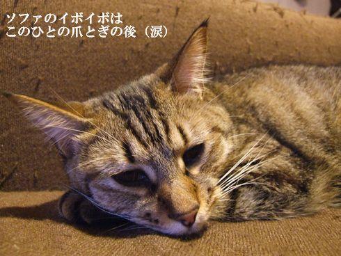 1_20091107183922.jpg