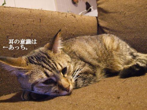 2_20091107183921.jpg