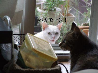 3_20091008175925.jpg