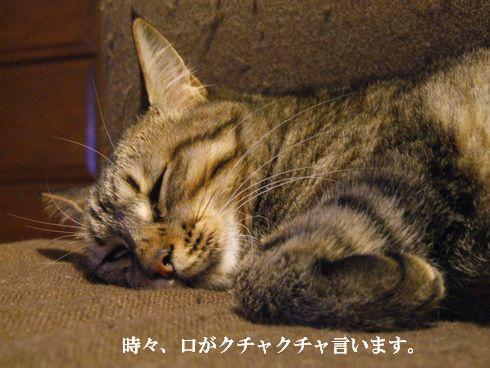4_20091107183921.jpg