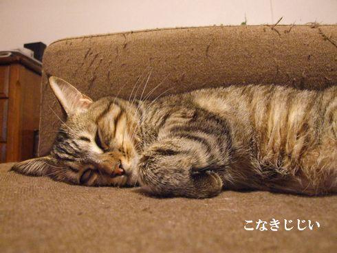 5_20091107183921.jpg