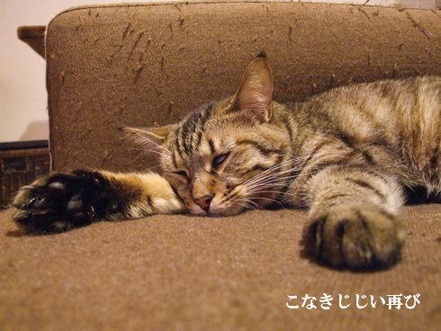 6_20091107183921.jpg
