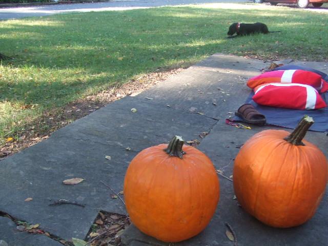 かぼちゃ はじめ