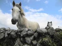 burrenhorses0611