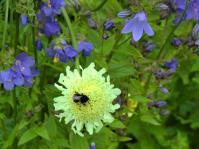 kawaguchisenseiflower5