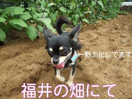09natsuhukui (90)0001
