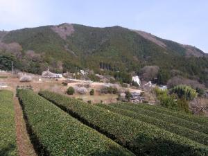 春の清川村 クリックで拡大