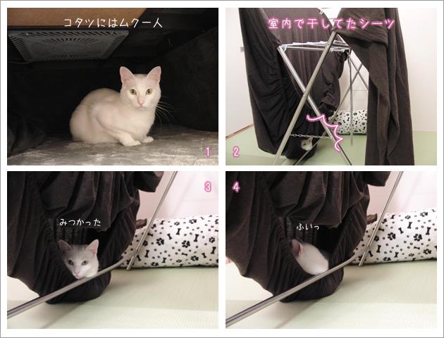 白猫4コママンガ