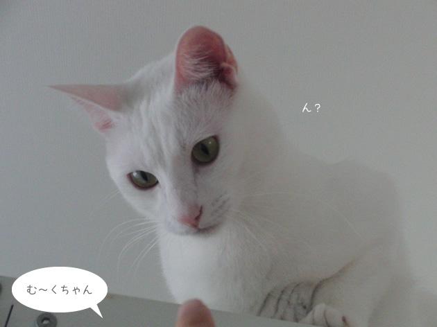 20110515_03.jpg
