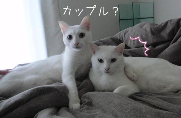 20110519_02.jpg