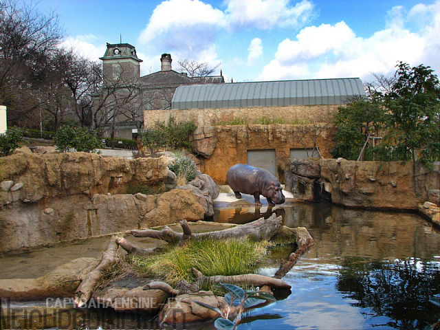 王子カバ池