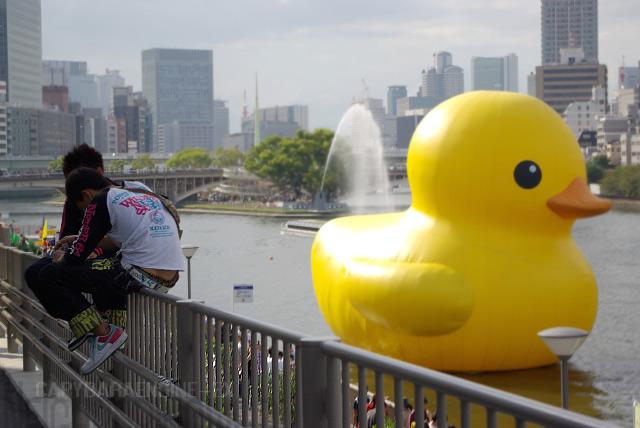 duck13.jpg